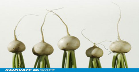 Turnips-007